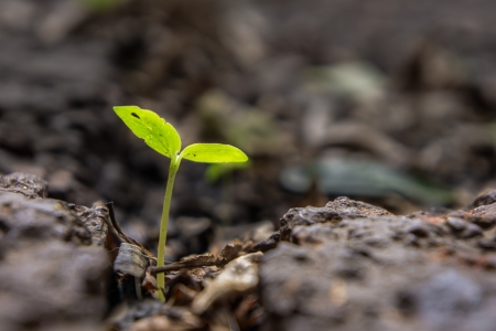 young green plant grow on the rock Stok Fotoğraf