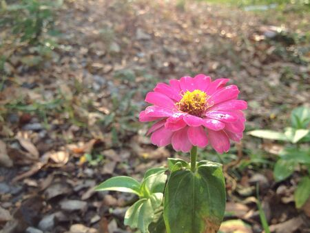 hope: A pink flower in forest