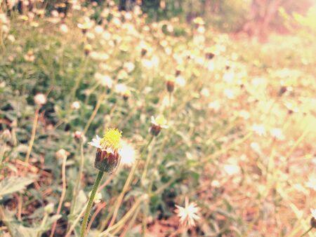 hope: Little spring flower Stock Photo