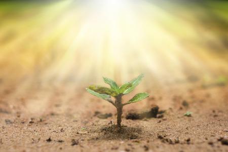 arbol raices: planta joven crece en el bosque