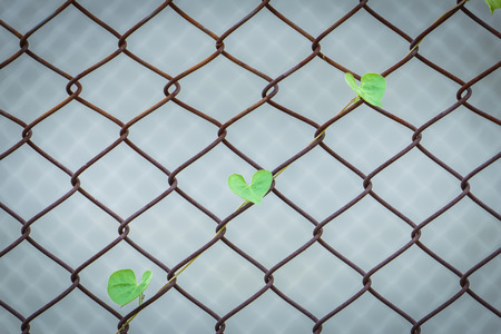 clime: creeping plant clime on the iron net for survival