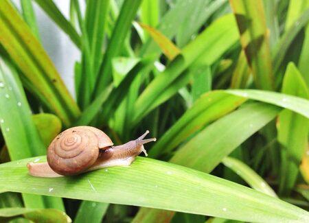 hope: Snail on a leaf