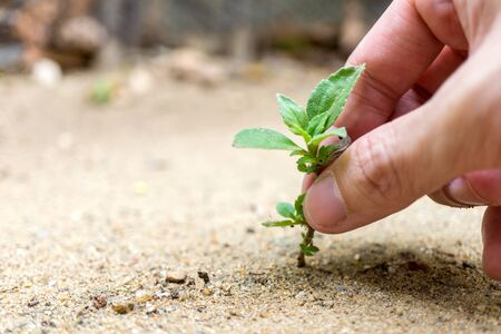 small plant is pulled by humans hand represent to hopeless or obstacle