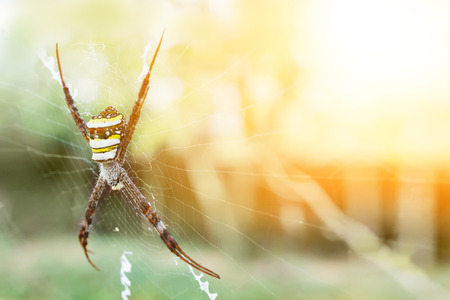 a spider is on its net with the sun