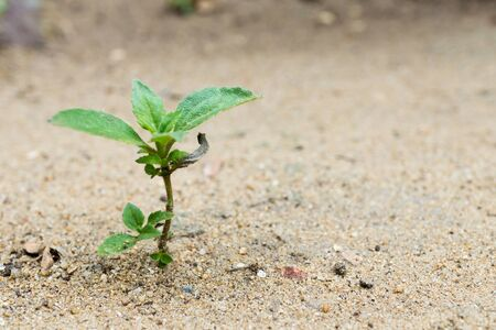small plant is growing represent to hope, start or life Stok Fotoğraf