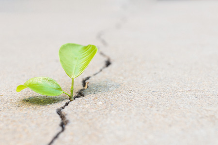 small plant is growing between crack concretre present to hope, start or life
