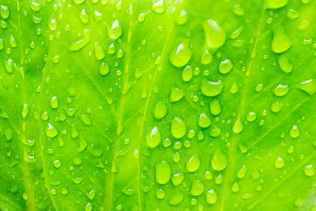 water drop on leaf Stok Fotoğraf