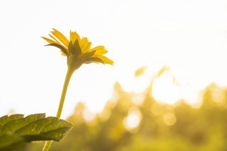 small flower under evening sun light