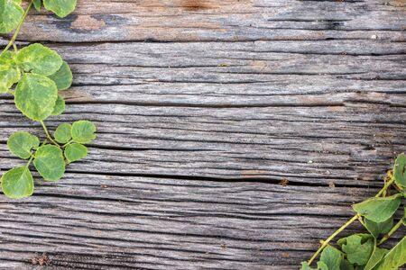 hojas antiguas: tablero de madera vieja con la planta Foto de archivo
