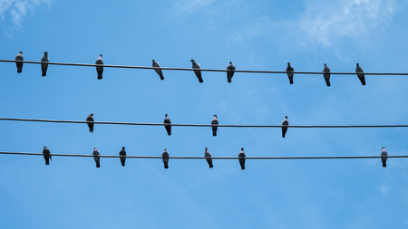 Pigeons bird hold on electric wire
