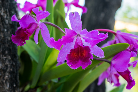 violated: Orchid violated colors in Thailand
