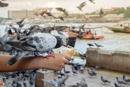 lovebirds: Pigeons near water , birds, blue birds in the way