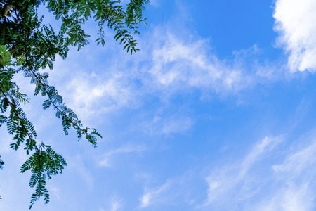 wispy: View of leafy green deciduous tree against sky with wispy clouds