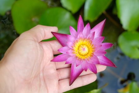 background pattern: hands holding lotus flower waterlily against leaves background