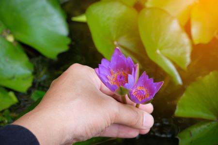Hands holding lotus flower waterlily against leaves background stock hands holding lotus flower waterlily against leaves background stock photo 88322475 mightylinksfo