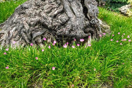 Tree root on purple flower green grass. Stock Photo