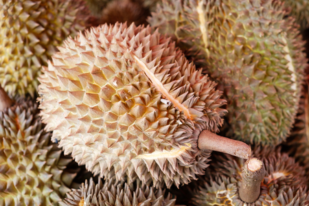 Group of durian in the market Thailand