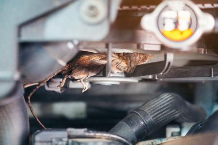 Mecánico de automóviles limpia el ratón sucio en forma de ventilador de aire. Intenta recolectar basura para construir un nido de ratas en el automóvil. problema de reparaciones de técnico