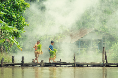 Asian children farmer on rice cross the wood bridge before the grown in paddy field. Stock Photo