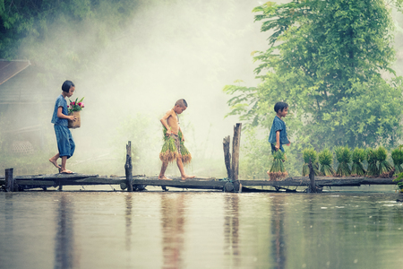 Asian children farmer on rice cross the wood bridge before the grown in paddy field. Фото со стока