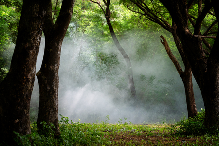 A beautiful foggy  forest ,Light in a tree fores Stockfoto
