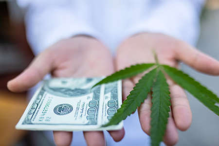 hands with cannabis and money the several banknote. The concept of selling marijuana, hemp, drugs 版權商用圖片