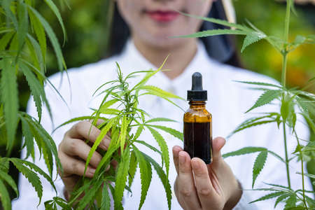Medicinal cannabis with extract oil in a bottle 版權商用圖片