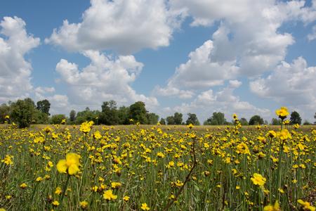 xwhite: Yellow flowers , blue sky Stock Photo