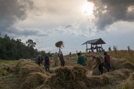 threshing: Thailand farmer, threshing, sky, mountains, clouds, grain rice, stack, mountain farmers.
