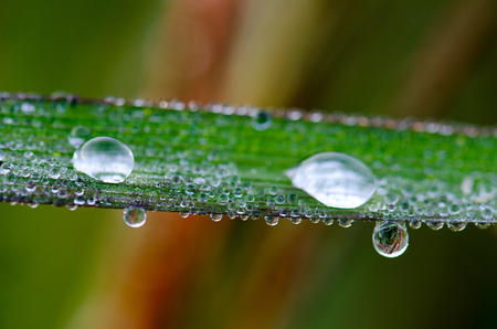 kropla deszczu: Macro of raindrop. Composition of nature.Dew on leaves