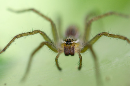 ambush: Ambush prey on spider webs trap nests. Stock Photo