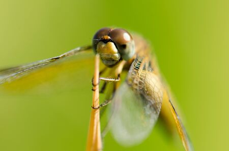 Dragonfly wing, middle wing, get some air and sunlight atop beautiful grass. Stock Photo
