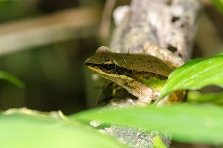 Frog sitting on a tree branch A beautiful green foliage. Stock Photo