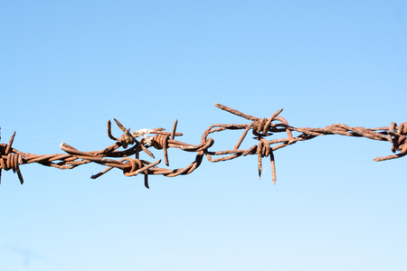 Old rusty barbed wire dark brown, full of scary clashed with beautiful blue sky.