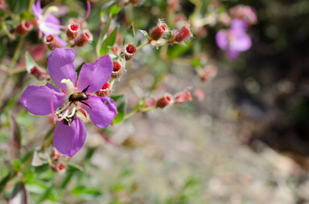 liverwort: Purple wildflowers Born on stream in the forest beautiful detailed background blur.