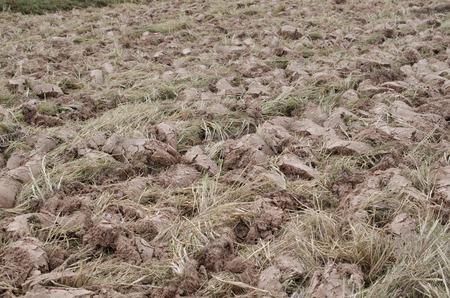 glutamate: Tiller revolution preparing agricultural season.