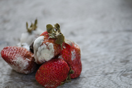 Strawberries, berries rot on the floor full of moldy wood Close to detail.