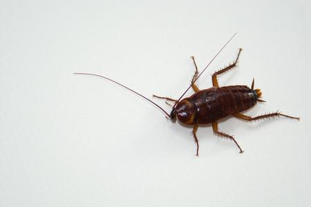 nightmarish: Roach macro white backdrop to highlight the details. Stock Photo