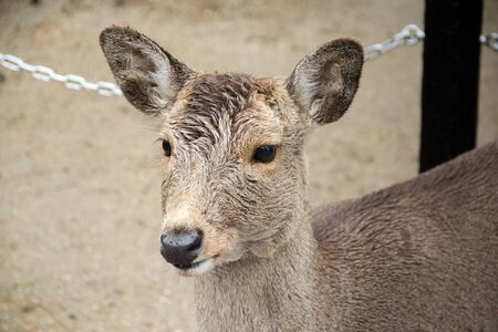 nara park: deer at Nara Park.