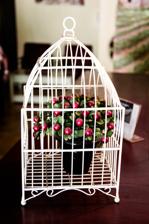 cheery: The little cherry tree in a white cage decoration in wedding event. Stock Photo