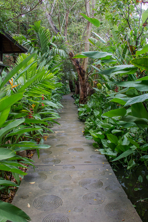 long way: the long way in the little garden at Thailand.
