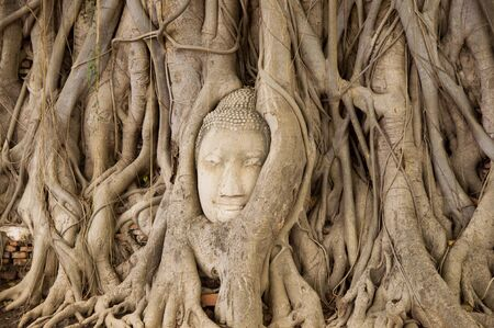 peacefull: Head of Buddha in a tree root