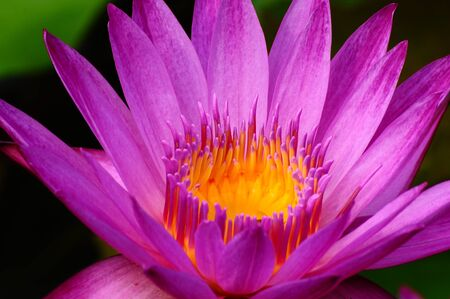 freshwater aquarium plants: closed up lotus Stock Photo