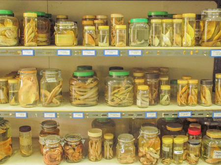 taxonomy: fish collection Stock Photo