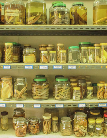reference: Reference collection of fish