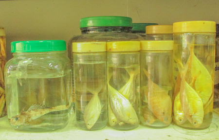 taxonomy: fish preserved Stock Photo
