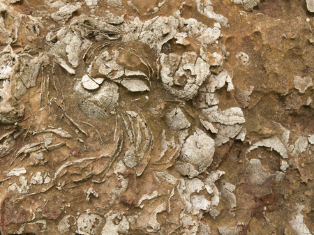 fossil: Shell fossil