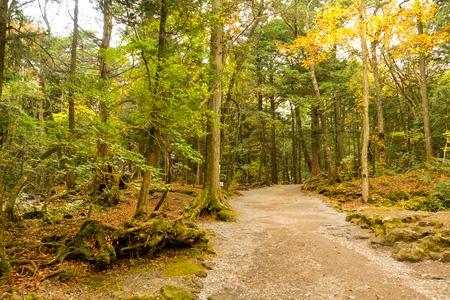 walking trail: Walking trail in the old forest at Kawaguchiko, Japan