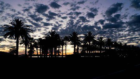 palm tree silhouette: Palm tree silhouette and the sunset Stock Photo