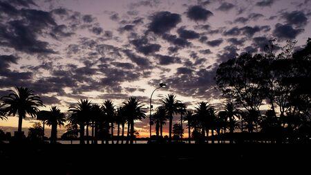 naranja arbol: cielo del atardecer y la silueta de la palmera